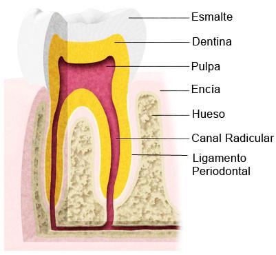 https://www.periodonciavigo.com/nueva-web/wp-content/uploads/2015/12/endodoncia-clinica-xiana-pousa-401x370.jpg